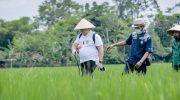 Foto: Bupati Jember, Hendy Siswanto, saat menjajal menyemprotkan pestisida hayati bersama petani.